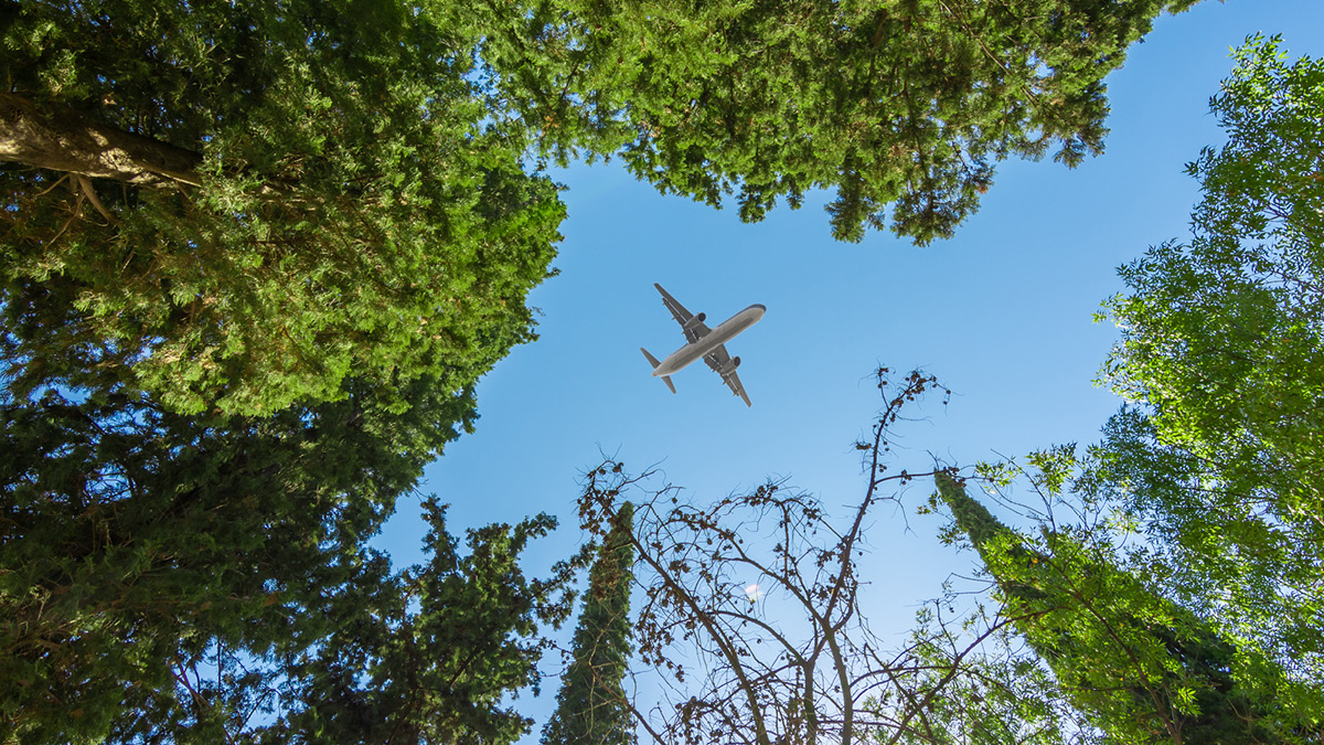A plane flying directly overhead set against a blue sky and seen through a gap in the canopy of green leaves above