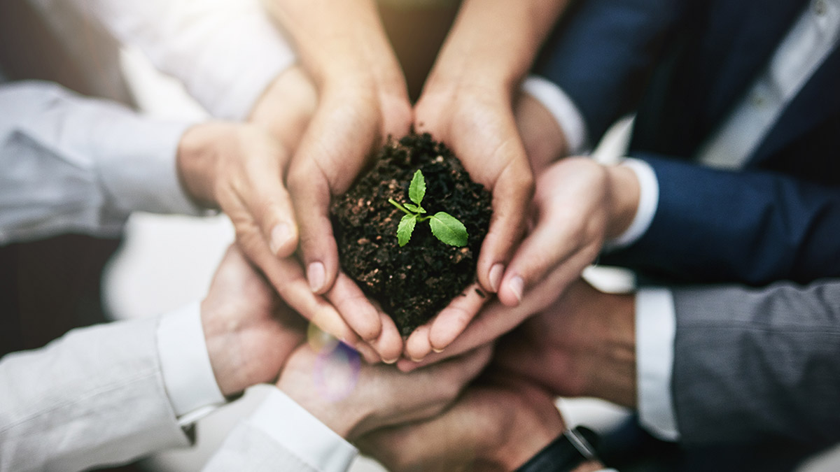Business hands holding a small plant together to represent the road to net-zero in the global hotel sector